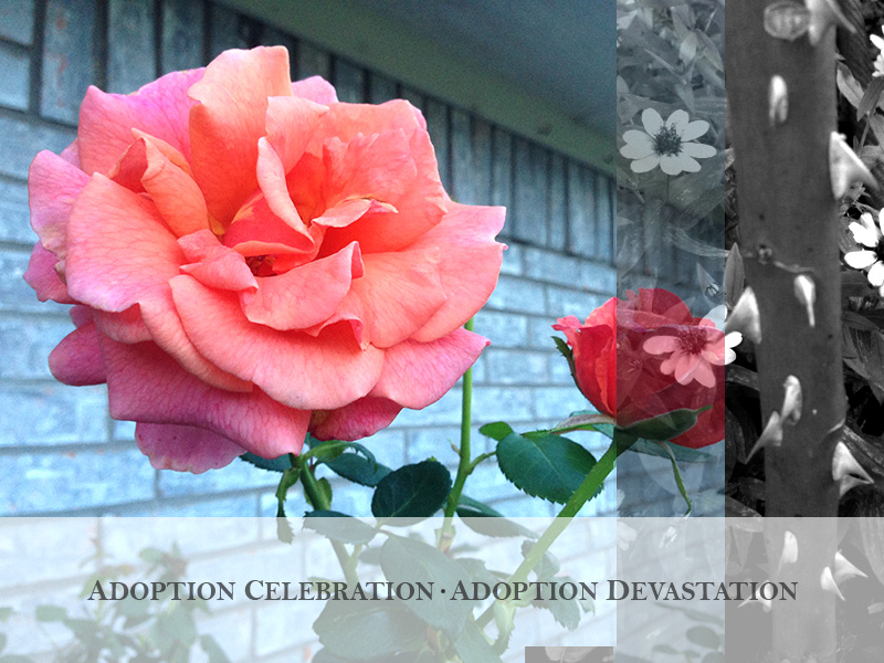 adoption-celebration-adoption-devastation